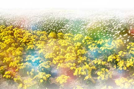天国のお花畑