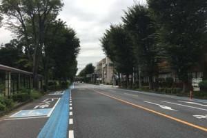 埼大通りのケヤキ並木