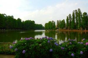 さいたま市別所沼公園