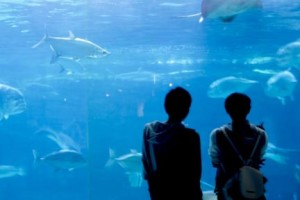 水族館でデート