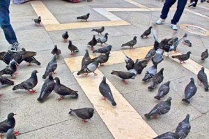 上野縁結びは鳩のおかげ